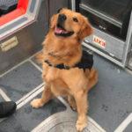 K-9 drug-sniffing dog overdoses during pre-Holy Ship! boarding inspectionK9 Jake